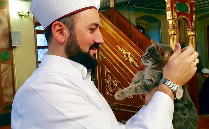 Istanbul Mosque Opens Its Doors to Stray Cats on Cold Winter Days