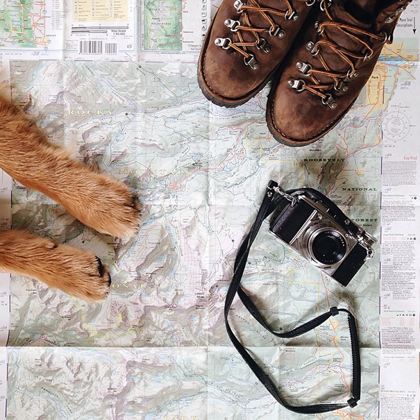 traveling-dog-aspen-the-mountain-pup-instagram-1