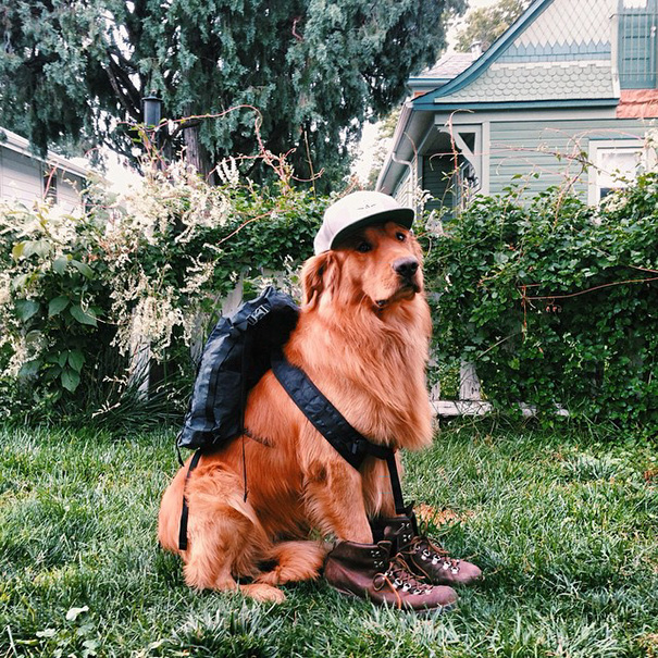 traveling-dog-aspen-the-mountain-pup-instagram-15