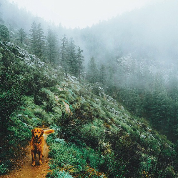 traveling-dog-aspen-the-mountain-pup-instagram-25