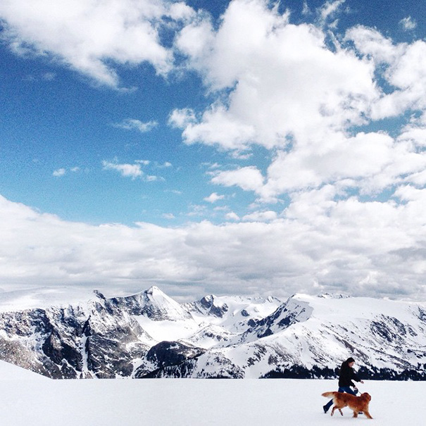 traveling-dog-aspen-the-mountain-pup-instagram-30