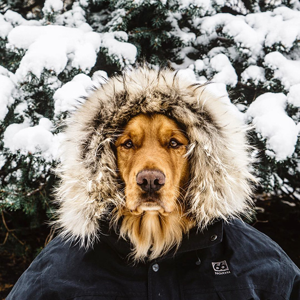 traveling-dog-aspen-the-mountain-pup-instagram-50