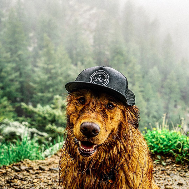 traveling-dog-aspen-the-mountain-pup-instagram-53