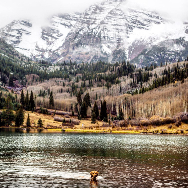 traveling-dog-aspen-the-mountain-pup-instagram-56