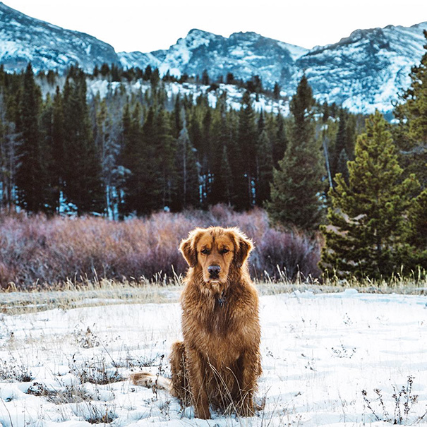 traveling-dog-aspen-the-mountain-pup-instagram-58