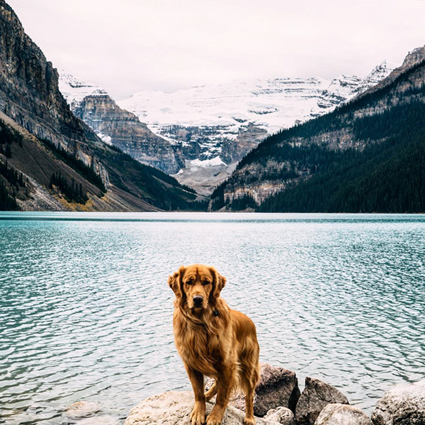 traveling-dog-aspen-the-mountain-pup-instagram-66