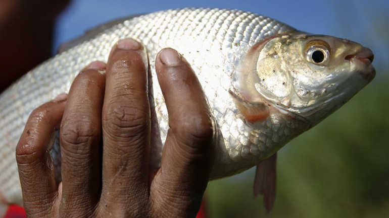 Fish Testing Positive For Cocaine, Anti Depressants