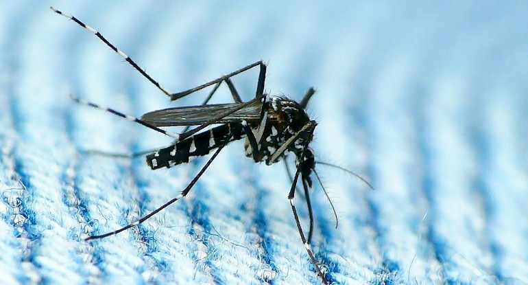 First Case of Sexually Transmitted Zika Has Been Reported in The US