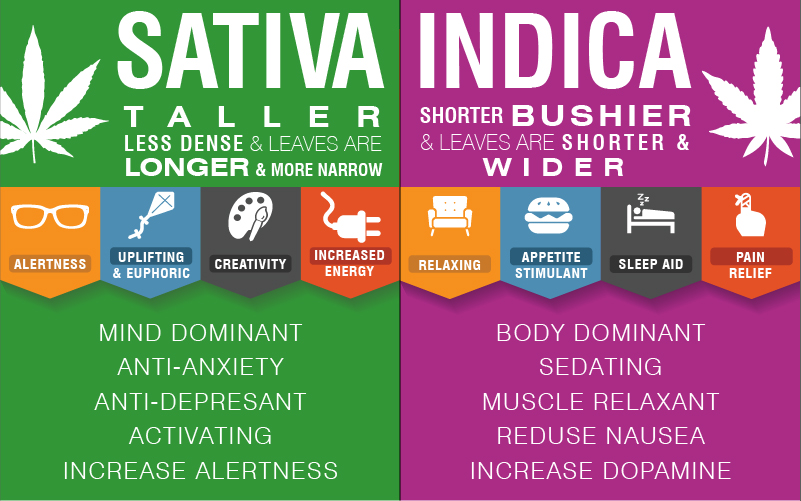 cannabis-infographic1