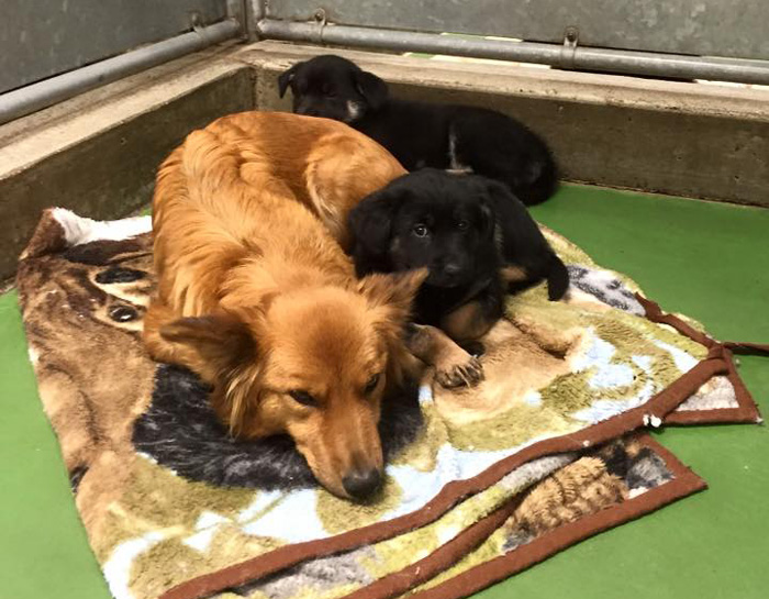 dog-escapes-kennel-comfort-puppies-barkers-pet-motel-1