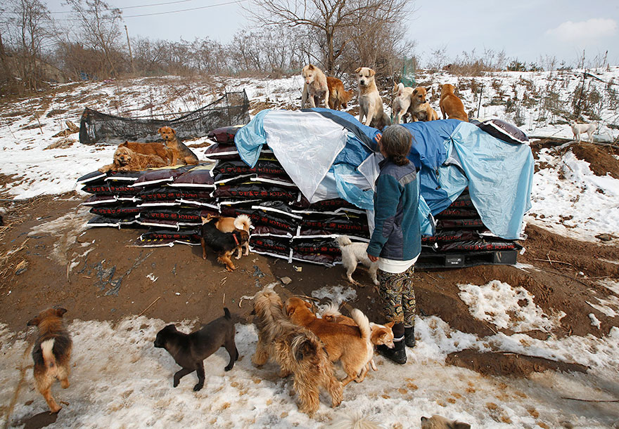 woman-saves-200-dogs-rescue-jung-myoung-sook-south-korea-2