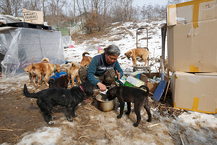 woman-saves-200-dogs-rescue-jung-myoung-sook-south-korea-3