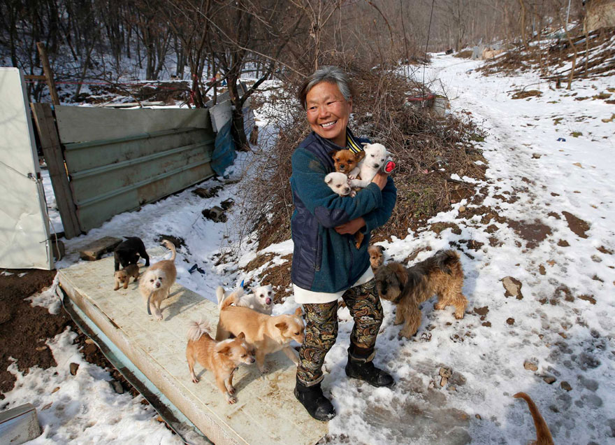 woman-saves-200-dogs-rescue-jung-myoung-sook-south-korea-5