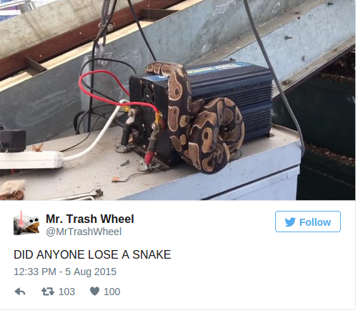 Mr. Trash Wheel Plucks 5 Million Cigarettes — and a PYTHON — from Baltimore Harbor Discovery Blog Discovery