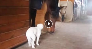Pit Bull Walks Towards A Giant Horse & Does THIS