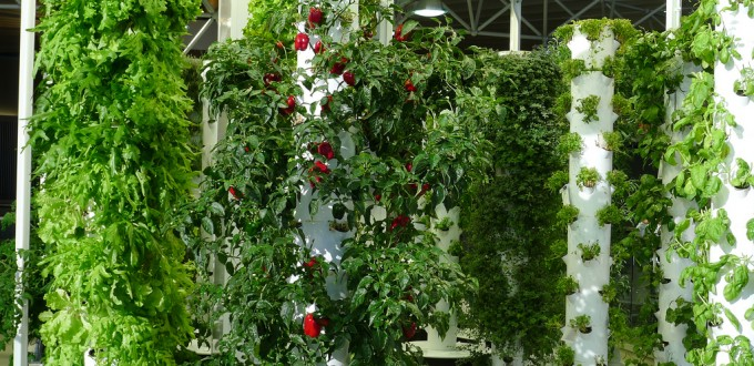 This Grocer Now Has an In Store Vertical Farm So YOU Pick Your Produce