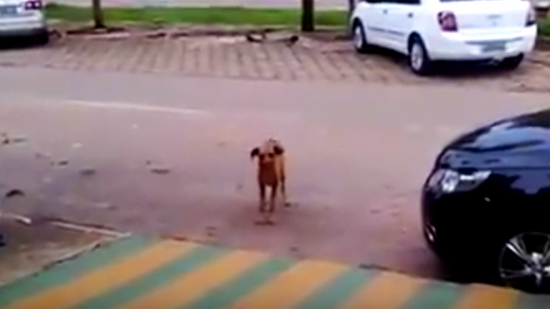 This Pup Dances To Music Coming Out Of The Car