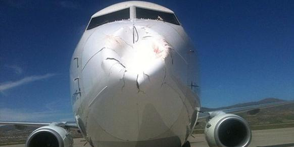 This Is What A Bird Strike Can Do To An Airplane