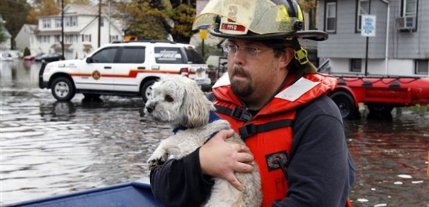hurricane-sandy-dog-015