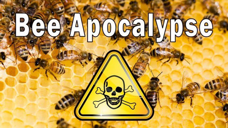 """Russia Warns: Global War Over """"Bee Apocalypse"""" Coming"""