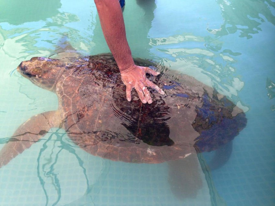 sea-turtle-recovery