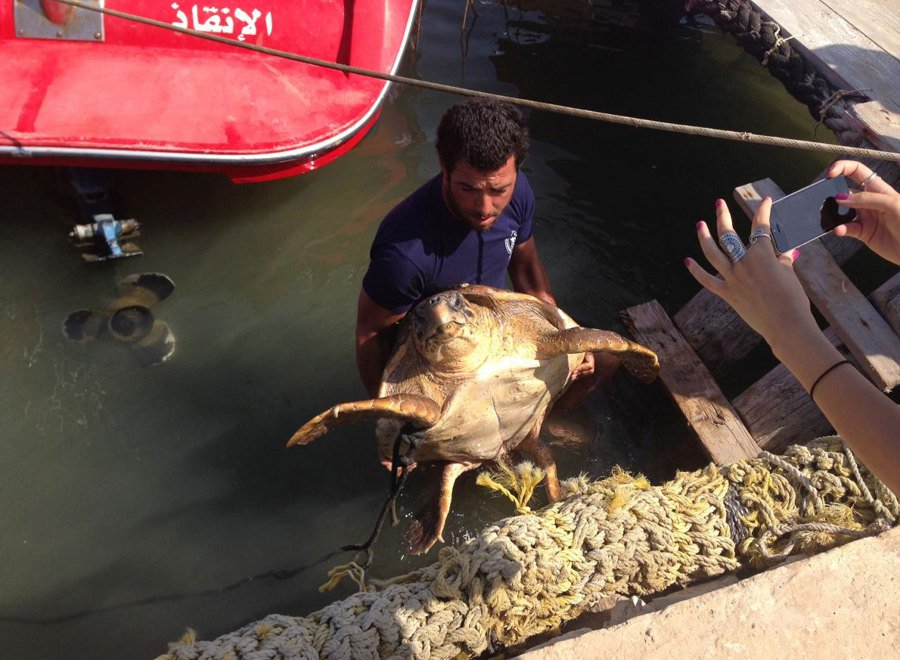 sea-turtle-rescue