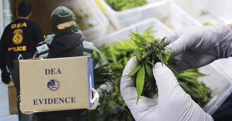 Report-Shows-DEA-Deliberately-Blocked-Beneficial-Science-to-Perpetuate-War-on-Cannabis-FB-768×403