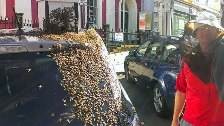Grandmother Followed by 20 Thousand Bees for Two Days