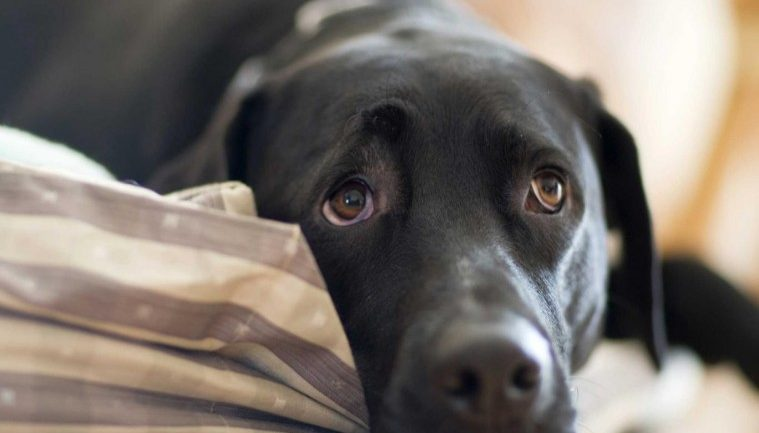 NEVER IGNORE THESE 10 SERIOUS SYMPTOMS FROM YOUR DOG