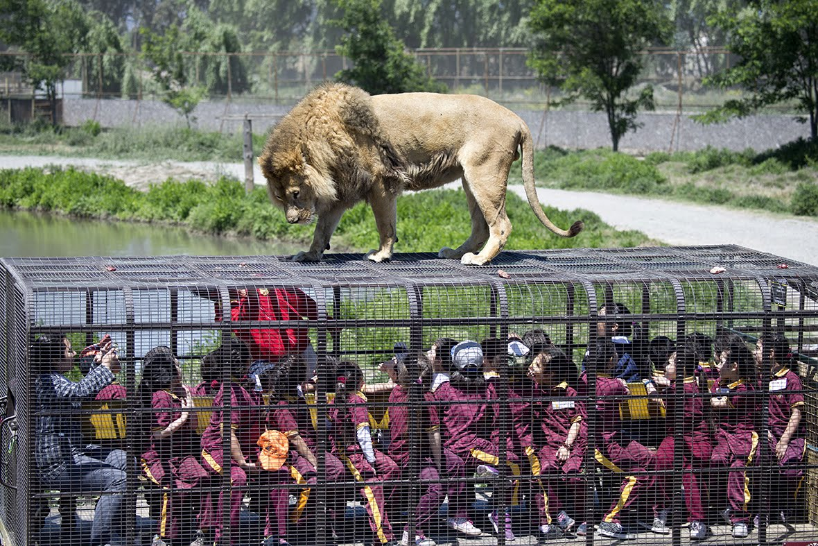 Helping Hands Of America >> This The Most Ferocious Zoo In China – Animals Roam Free and People Are Caged | WorldTruth.Tv