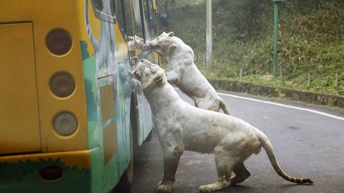 most-ferocious-zoo-in-china3