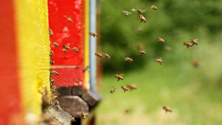 Maryland To Become First State In U.S. To Ban Bee-Killing Pesticides