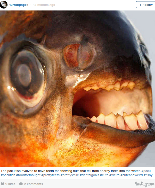 'Genitalia eating human toothed' fish pulled from Michigan lakes PHOTO — RT Viral