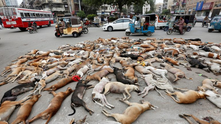 People Outraged as Karachi Authorities Poison at Least 700 Stray Dogs