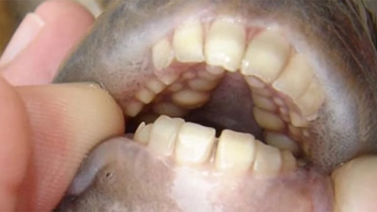 Genitalia Eating Human Toothed Fish Pulled From Michigan Lake