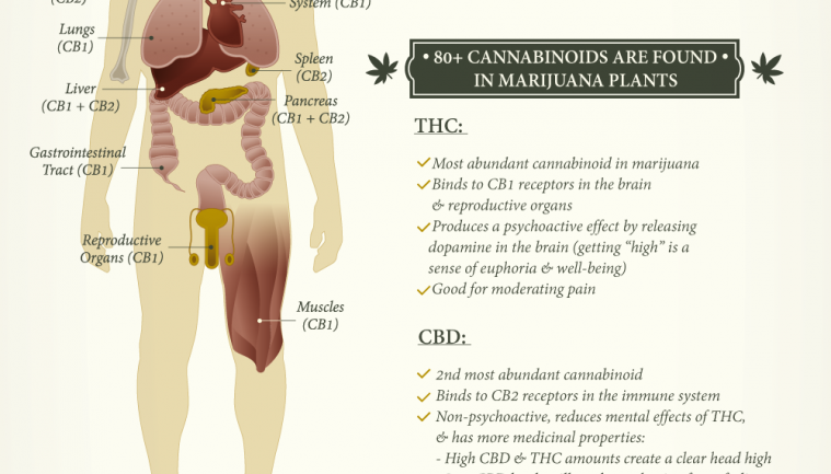 WHAT CANNABIS DOES TO YOUR MIND & BODY DEPENDING ON HOW YOU INGEST IT