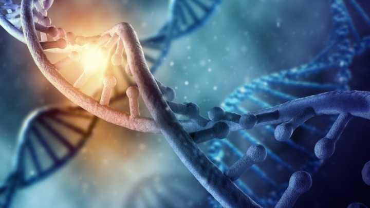 19 Pieces Of Non Human DNA Found In Human Genome