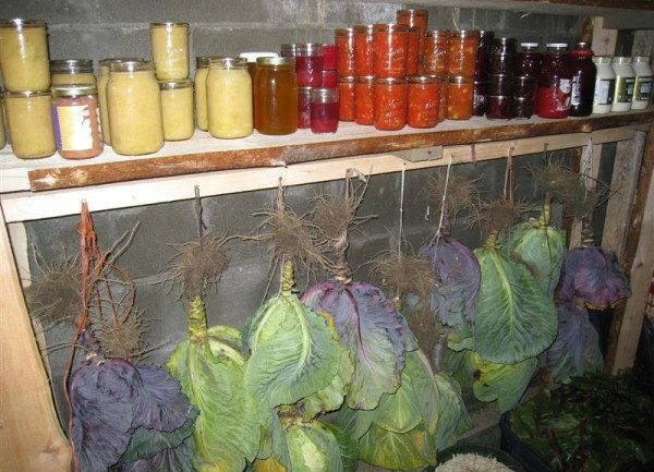 How To Store Fresh Vegetables For Months.. Without A Refrigerator