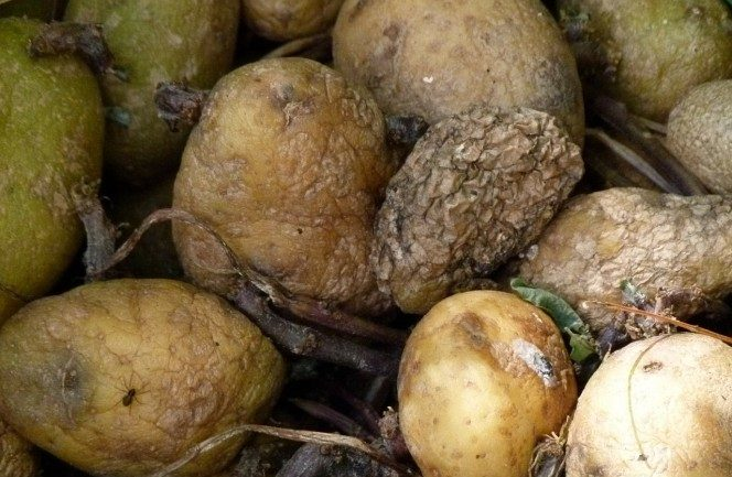 This Is Why You Should Be Especially Careful With Expired Potatoes