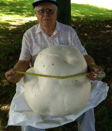 This 84 Year Old Retiree Wants 'the Internet' to See a Massive Mushroom He Found