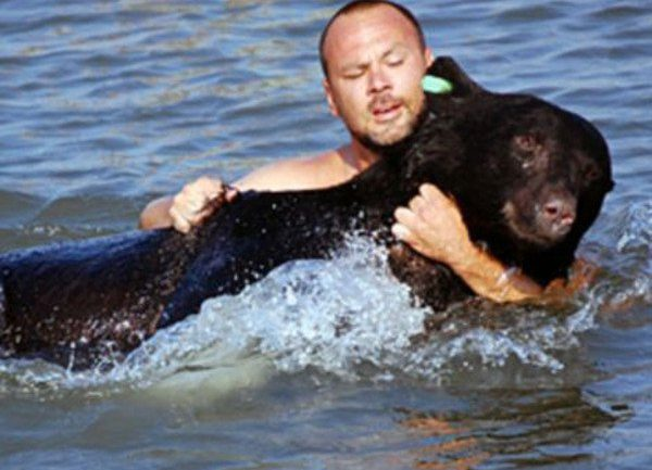Brave Man Saving a Drowning 400-lb Black Bear Is Possibly one of the Greatest Rescue Stories Eve