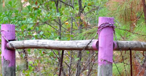 Local Police Are Warning If You Spot Purple Fence Posts To Get Away As Soon As You Can