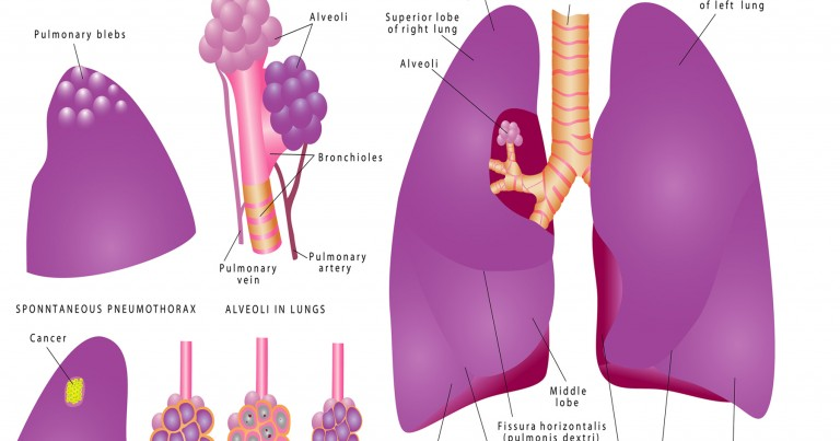 lung-diagram-whole-lung-768x403