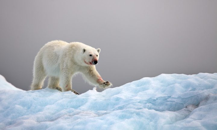 Scientists At An Arctic Base Were Trapped By Polar Bears For Weeks