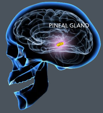 One Of The BIGGEST Secrets Kept From Humanity: Pineal Gland