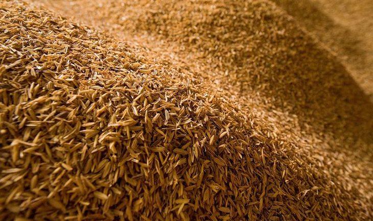 India's Organic Rice Revolution Proves GMO's Are Unnecessary
