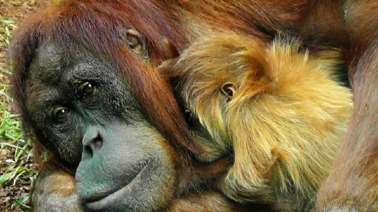 If You Care About Animals and the Earth, Here's Why You Need to Boycott Palm Oil Immediately