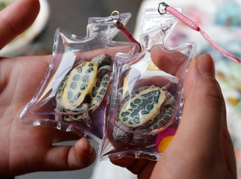 Live Animals Are Being Sold As Trinkets In Tiny Plastic Keychains