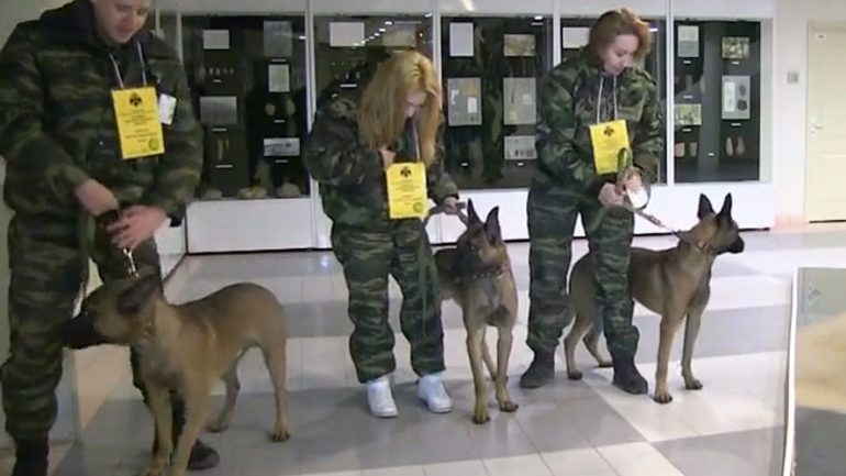Russia Receives Three Cloned Canines From South Korea