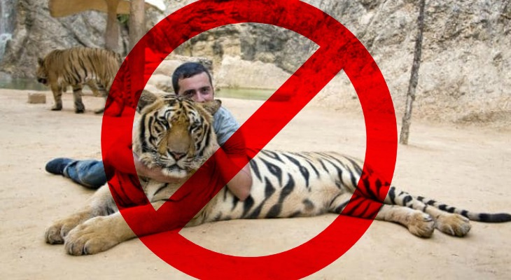 TripAdvisor Will No Longer Sell Tickets To Animal Attractions That Perpetuate Cruelty